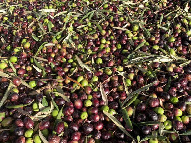 Azeite de Oliva - Super Alimentos